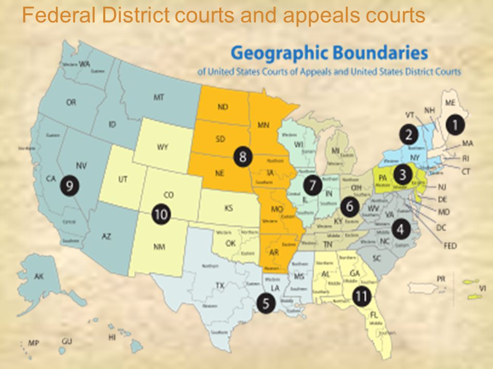 Federal District courts and appeals courts