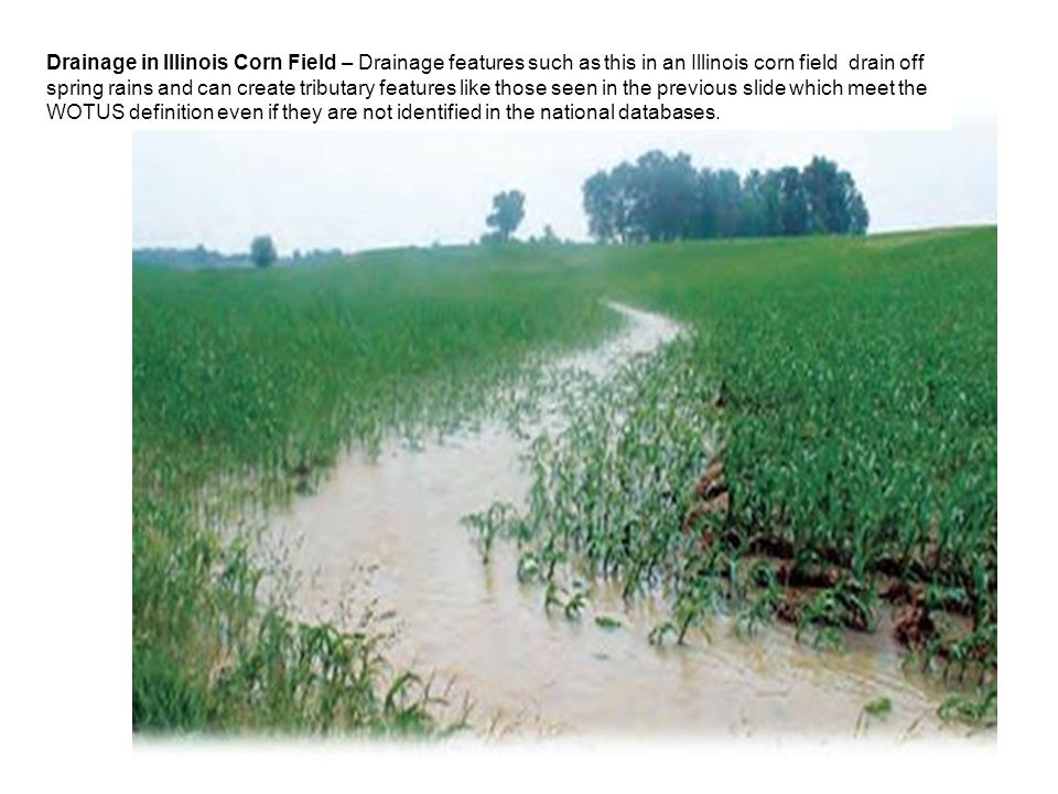 Drainage in Illinois Corn Field – Drainage features such as this in an Illinois corn field drain off spring rains and can create tributary features like those seen in the previous slide which meet the WOTUS definition even if they are not identified in the national databases.