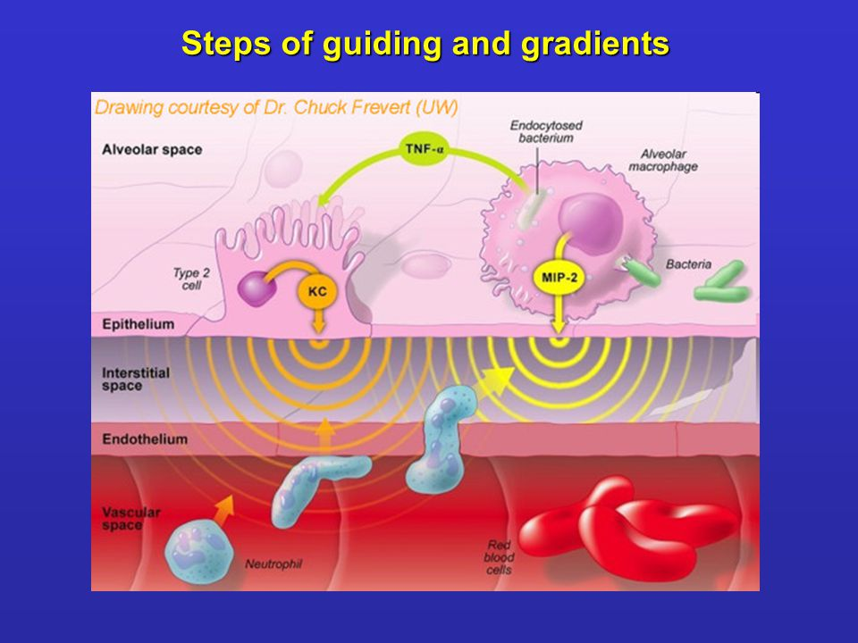 Steps of guiding and gradients