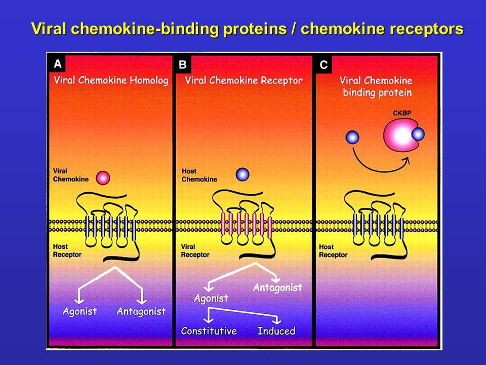 Viral chemokine-binding proteins / chemokine receptors