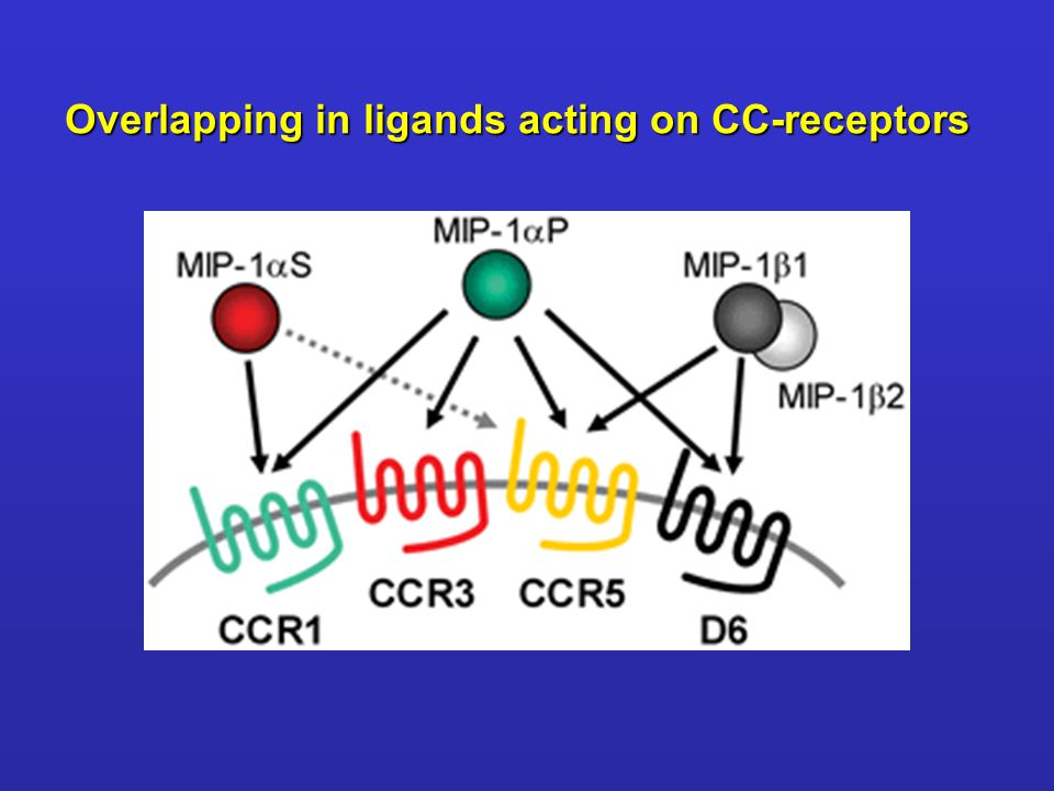 Overlapping in ligands acting on CC-receptors