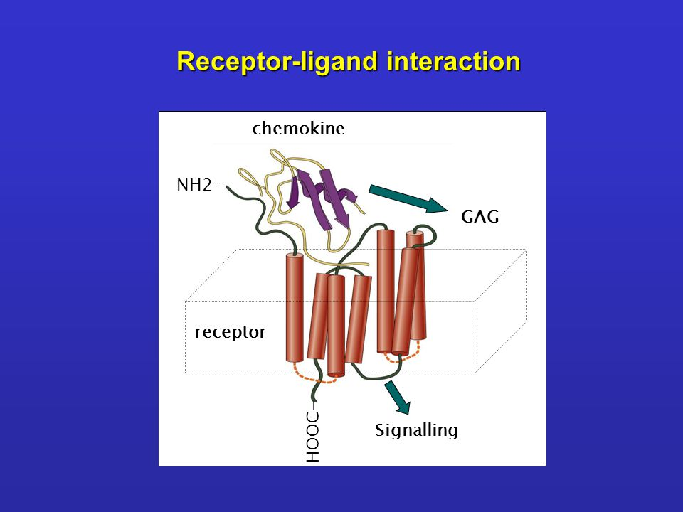 Receptor-ligand interaction