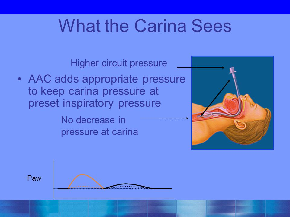 What the Carina Sees Higher circuit pressure. AAC adds appropriate pressure to keep carina pressure at preset inspiratory pressure.