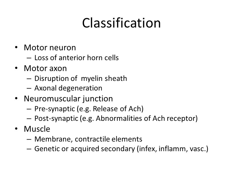 Classification Motor neuron Motor axon Neuromuscular junction Muscle
