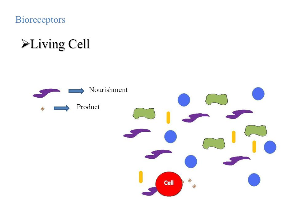Bioreceptors Living Cell Nourishment Product