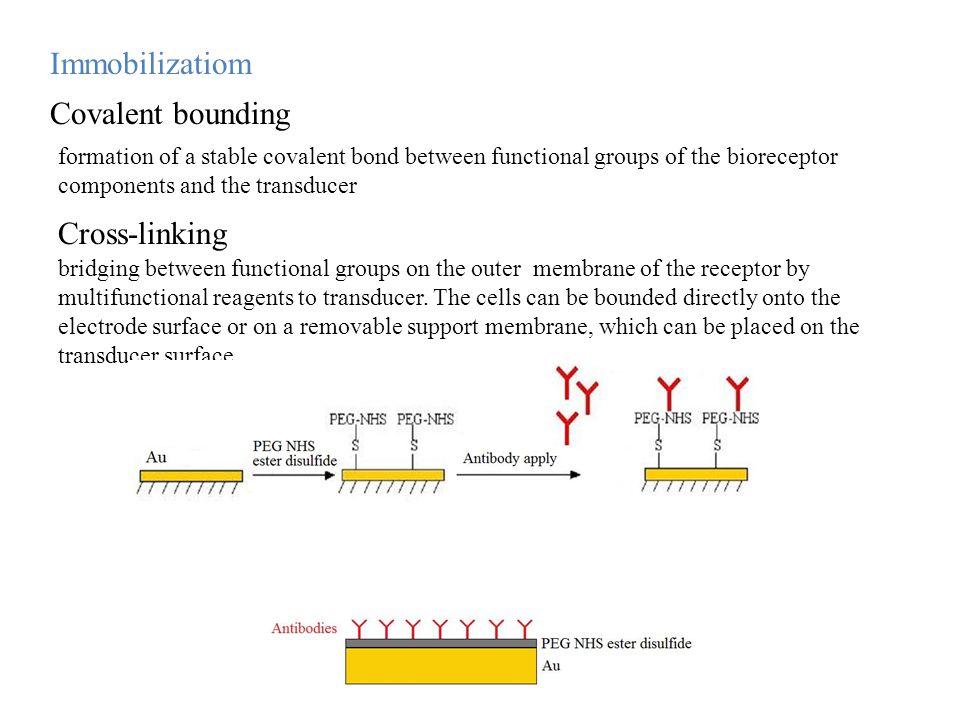 Immobilizatiom Covalent bounding Cross-linking