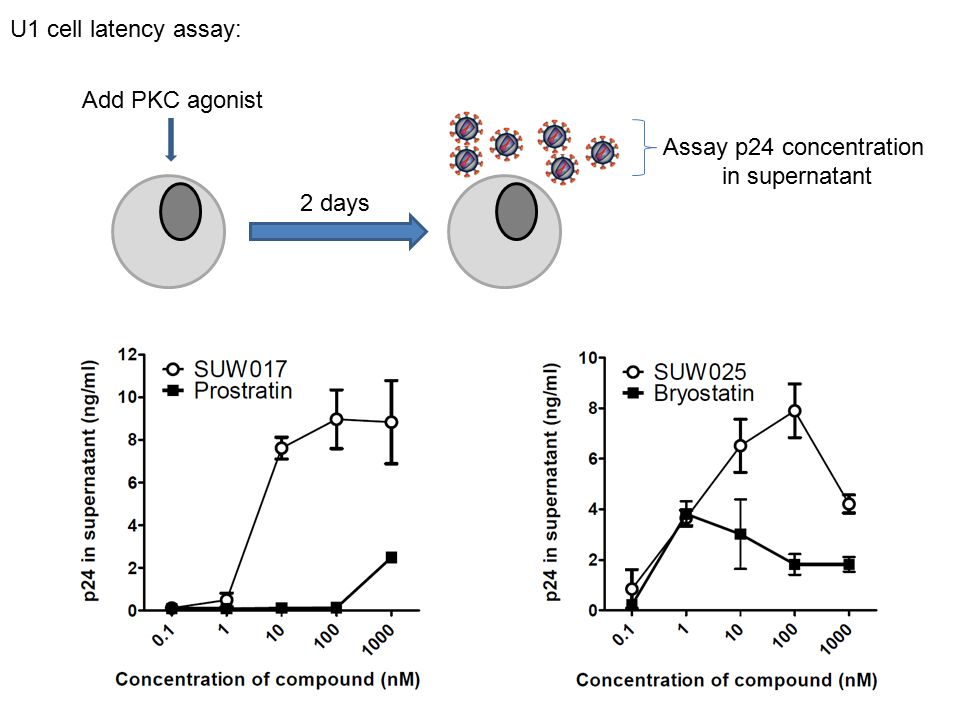 U1 cell latency assay: Add PKC agonist Assay p24 concentration in supernatant 2 days