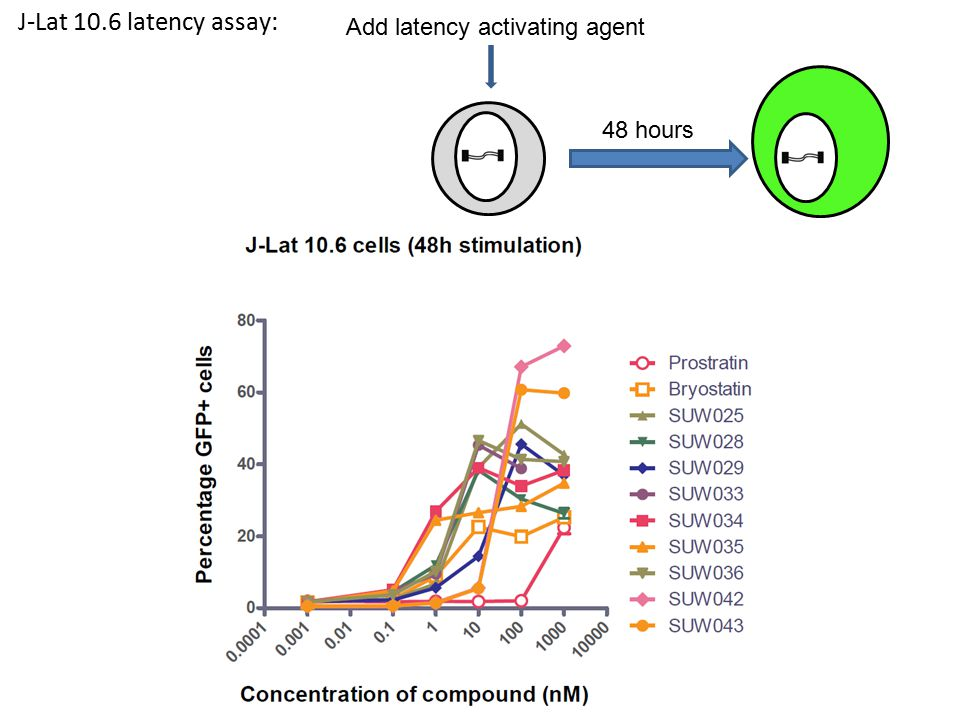 J-Lat 10.6 latency assay: Add latency activating agent 48 hours