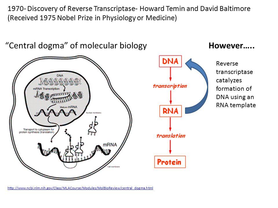 Central dogma of molecular biology However…..