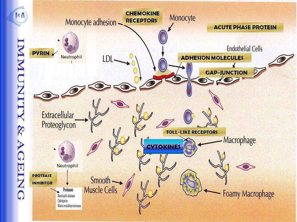 CYTOKINES CHEMOKINE RECEPTORS ACUTE PHASE PROTEIN PYRIN