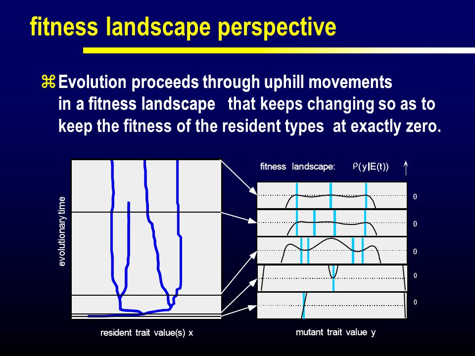 fitness landscape perspective