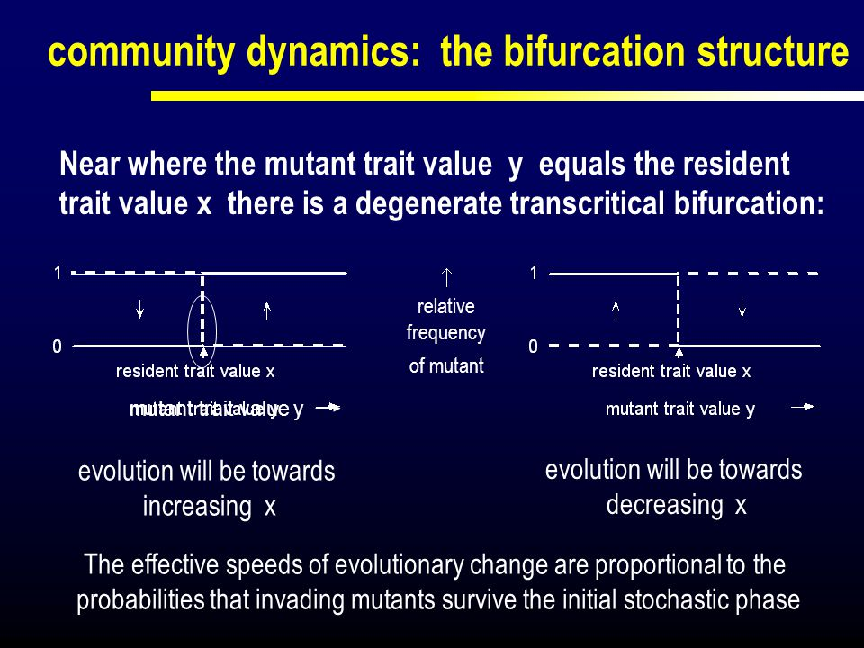 community dynamics: the bifurcation structure