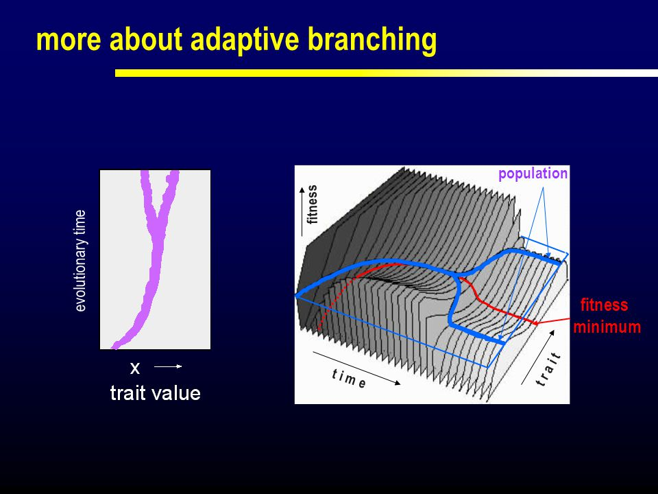 more about adaptive branching