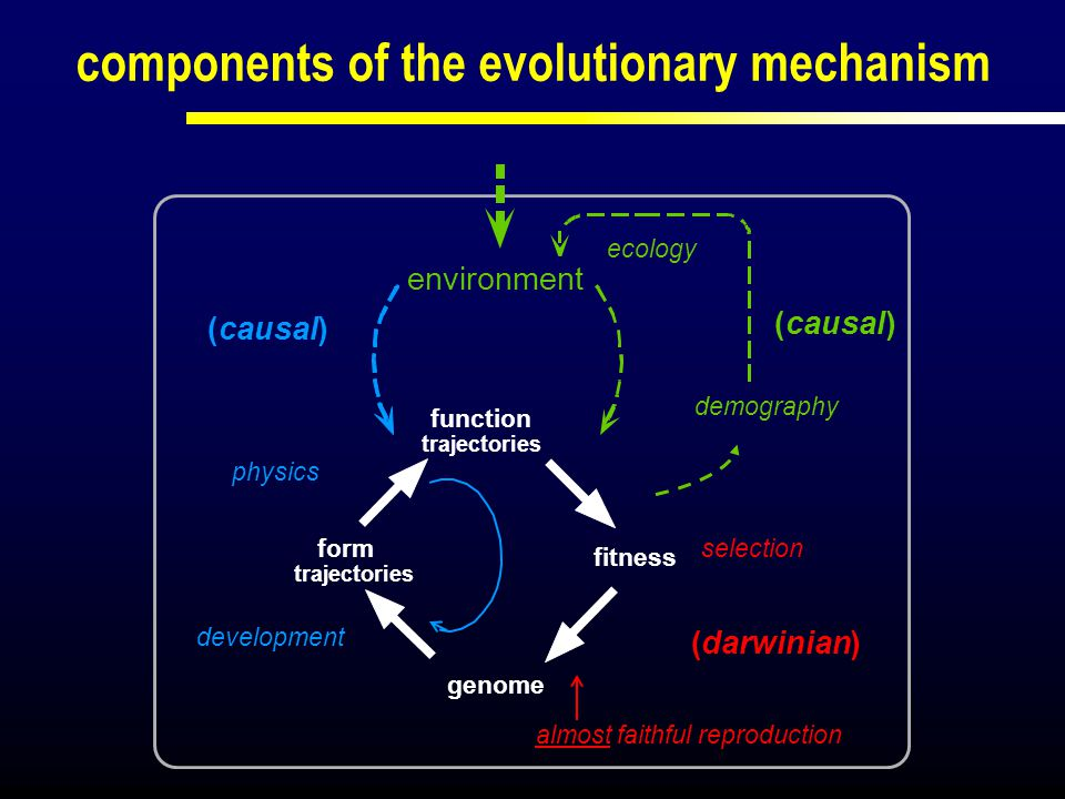 components of the evolutionary mechanism