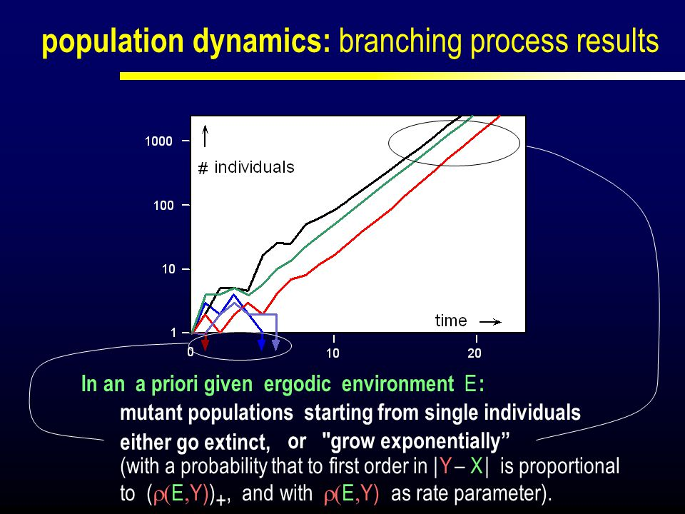 population dynamics: branching process results