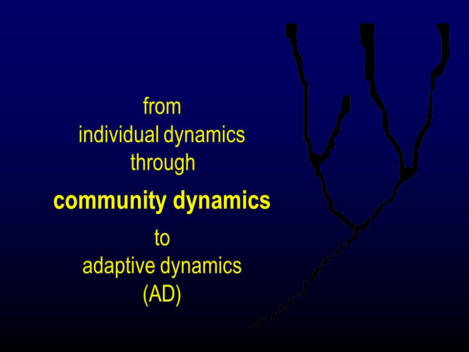 from individual dynamics through community dynamics to adaptive dynamics (AD)