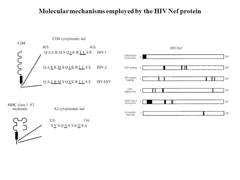 Molecular mechanisms employed by the HIV Nef protein