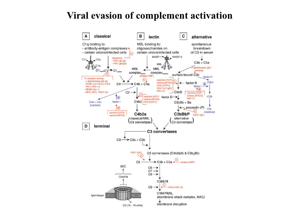 Viral evasion of complement activation