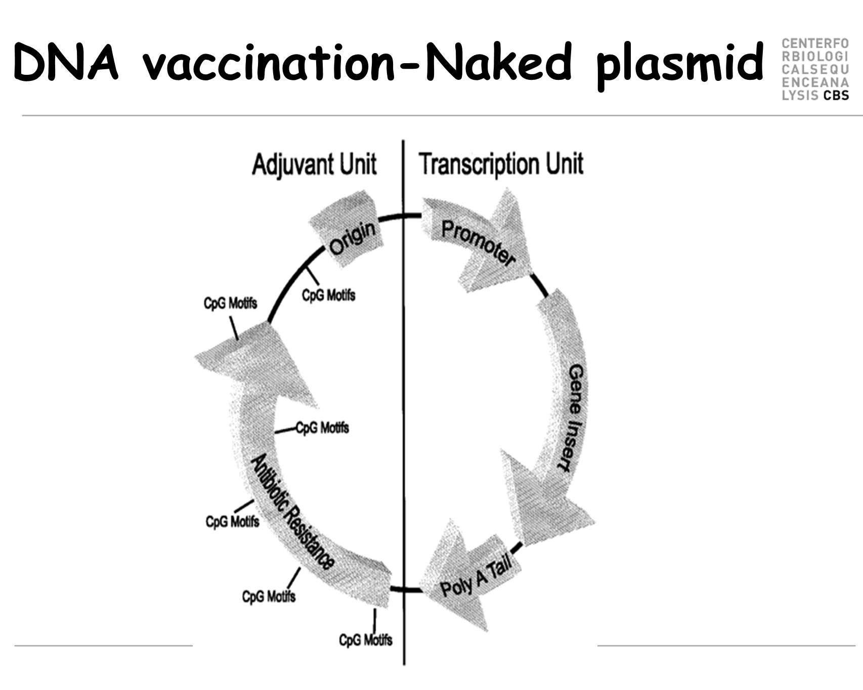DNA vaccination-Naked plasmid