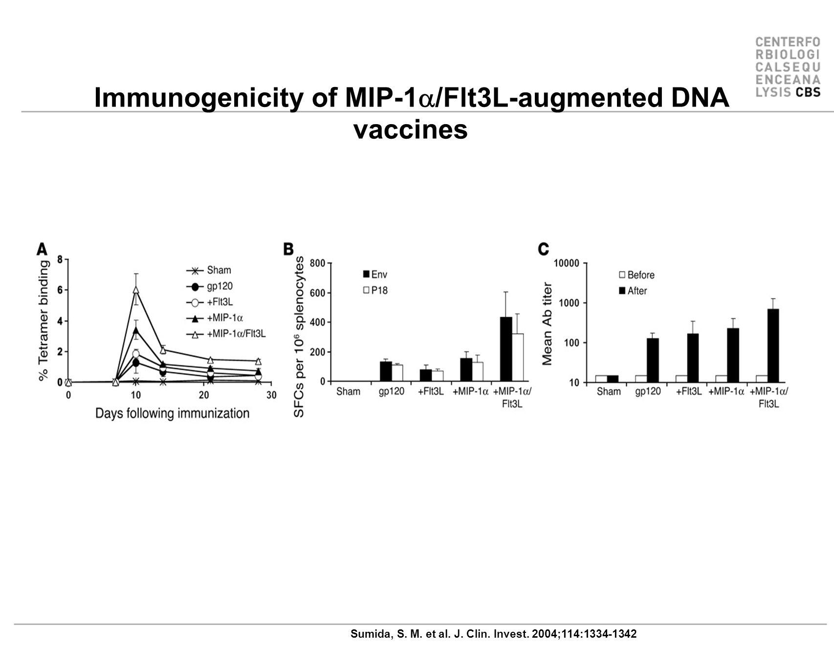 Immunogenicity of MIP-1a/Flt3L-augmented DNA vaccines