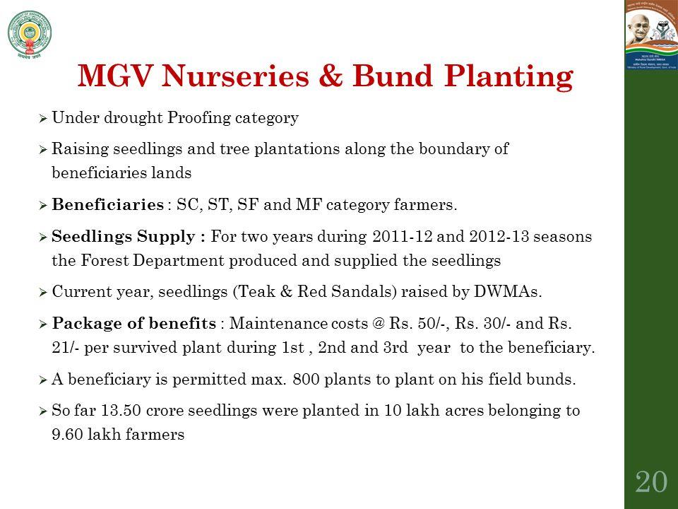 MGV Nurseries & Bund Planting