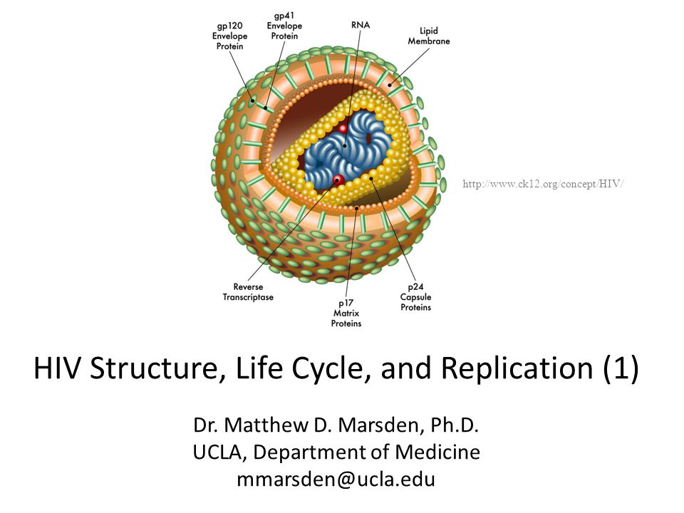 HIV Structure, Life Cycle, and Replication (1)