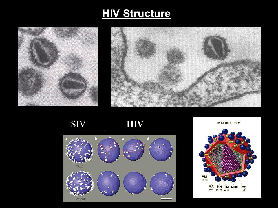 HIV Structure SIV HIV Nature 441, 847-852 (15 June 2006)