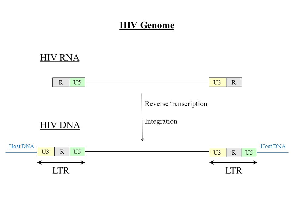 HIV Genome HIV RNA HIV DNA LTR Reverse transcription Integration R U5