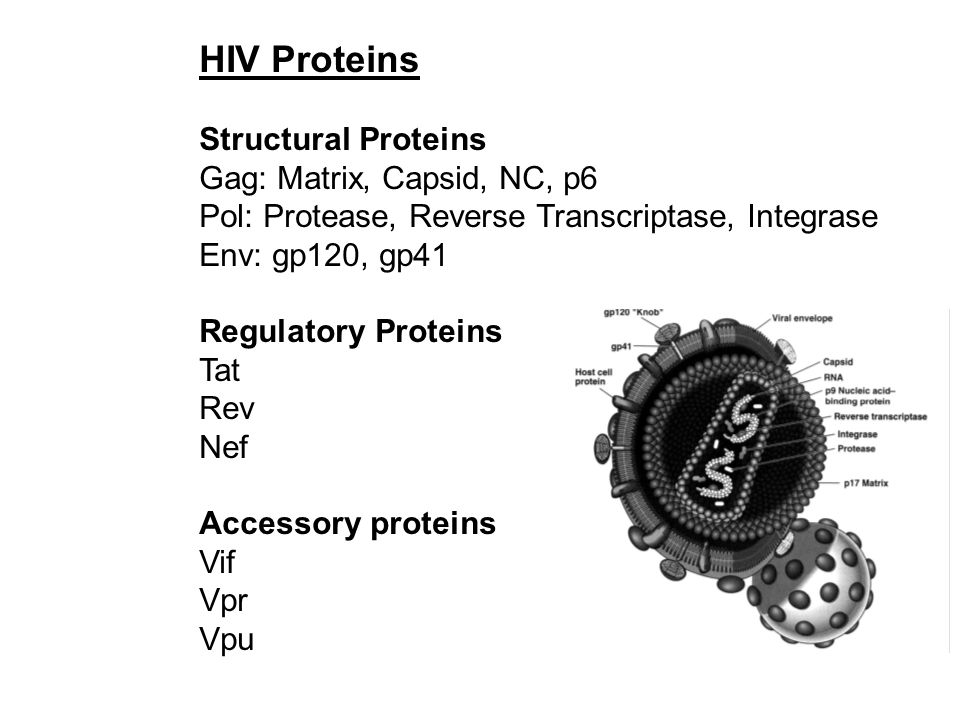 HIV Proteins Structural Proteins Gag: Matrix, Capsid, NC, p6