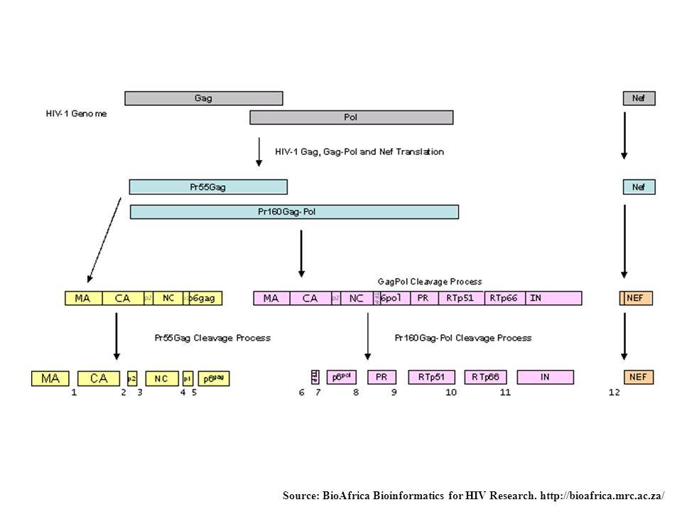 Source: BioAfrica Bioinformatics for HIV Research. http://bioafrica