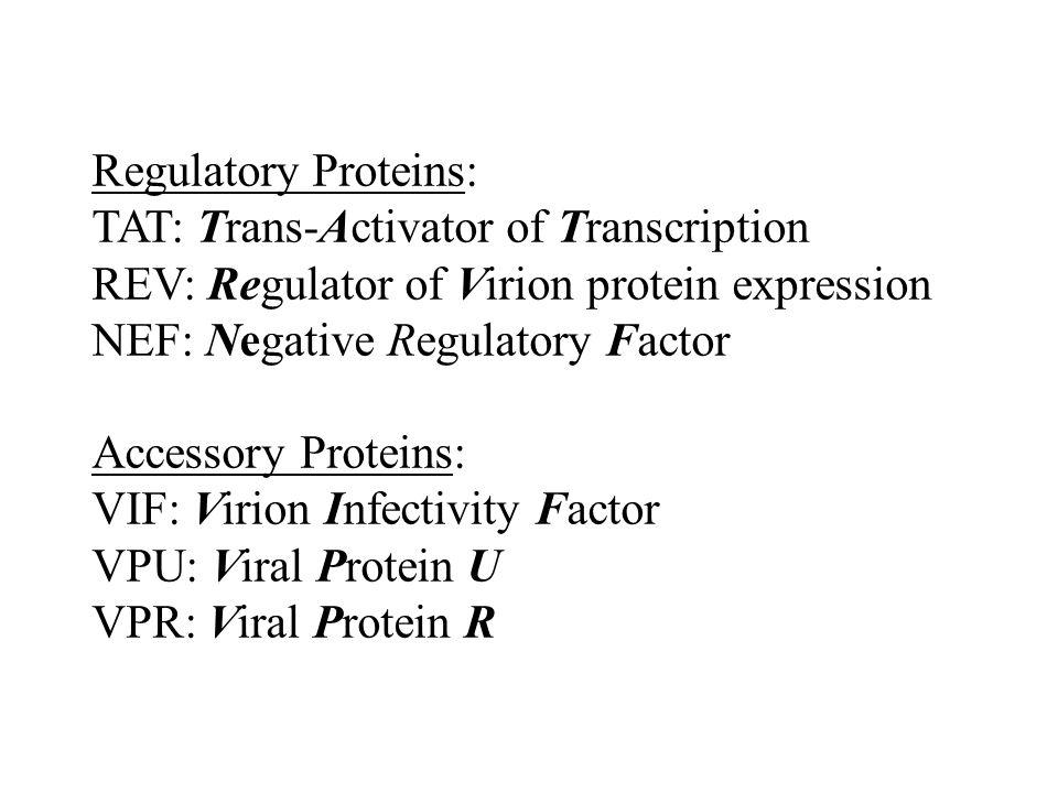 Regulatory Proteins: TAT: Trans-Activator of Transcription. REV: Regulator of Virion protein expression.