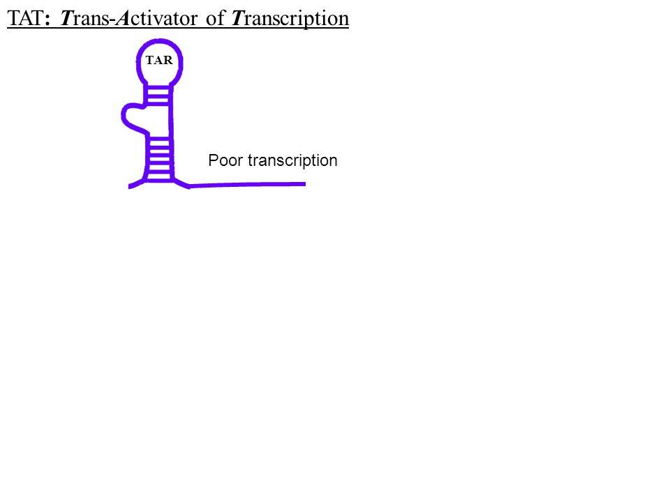 TAT: Trans-Activator of Transcription
