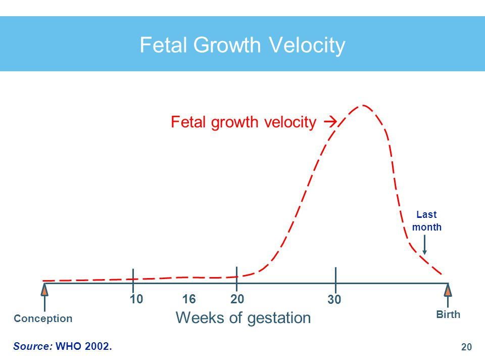 Fetal Growth Velocity Fetal growth velocity  Weeks of gestation 10 16