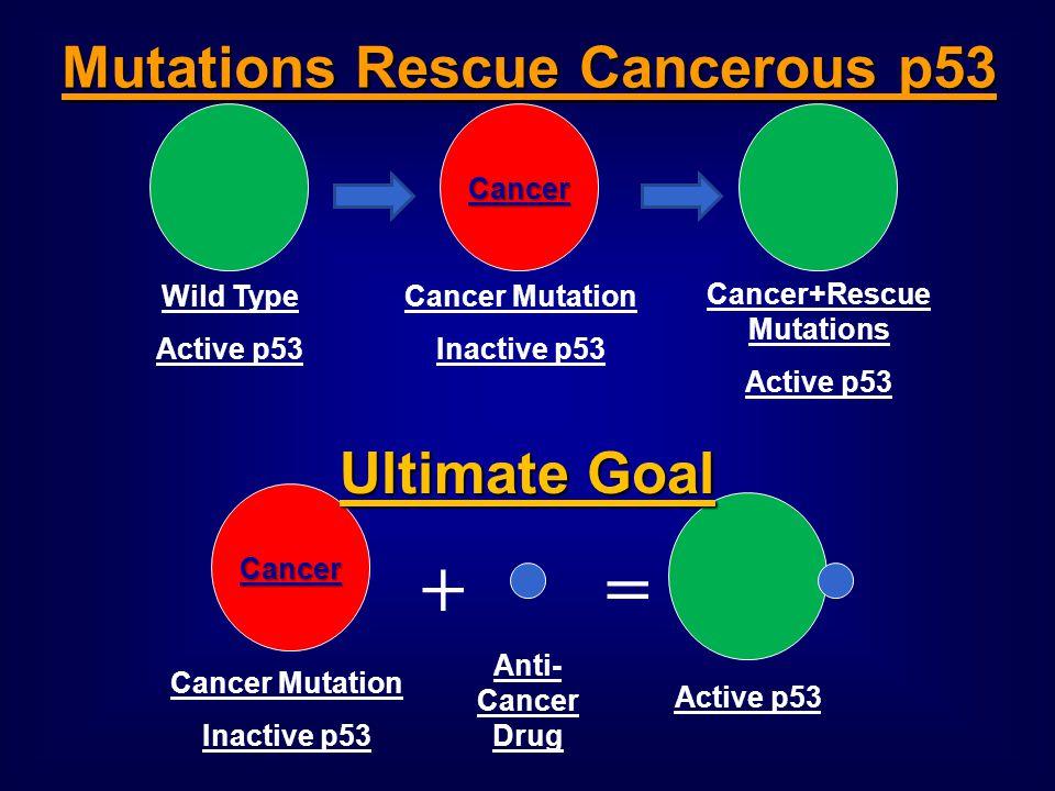 Mutations Rescue Cancerous p53