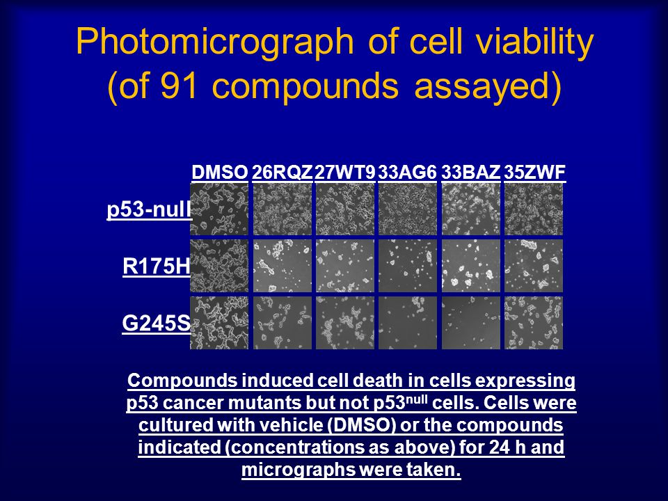 Photomicrograph of cell viability (of 91 compounds assayed)