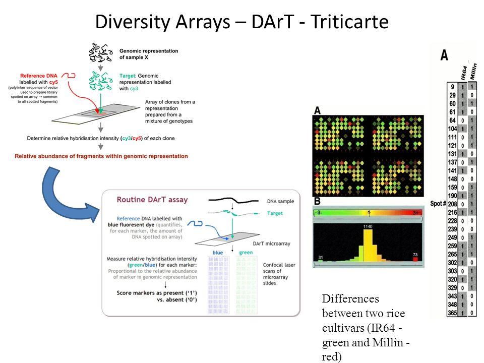 Diversity Arrays – DArT - Triticarte