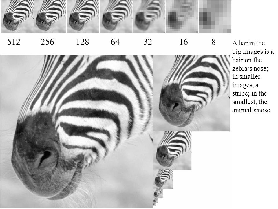 A bar in the big images is a hair on the zebra's nose; in smaller images, a stripe; in the smallest, the animal's nose