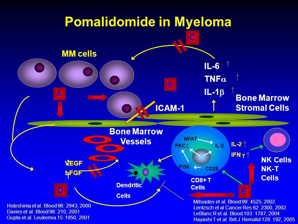 Pomalidomide in Myeloma