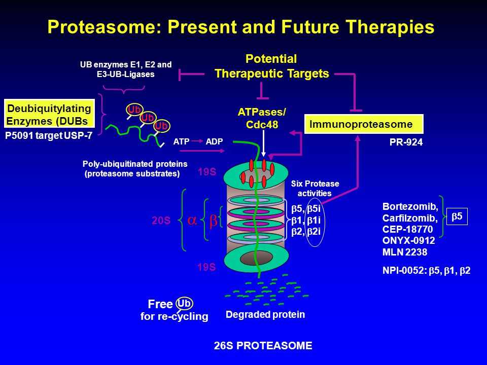 Novel Agents for Frontline Multiple Myeloma: A New Era of Efficacy