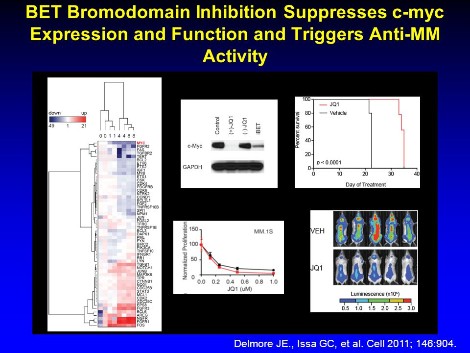 BET Bromodomain Inhibition Suppresses c-myc Expression and Function and Triggers Anti-MM Activity