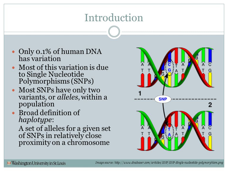 Introduction Only 0.1% of human DNA has variation