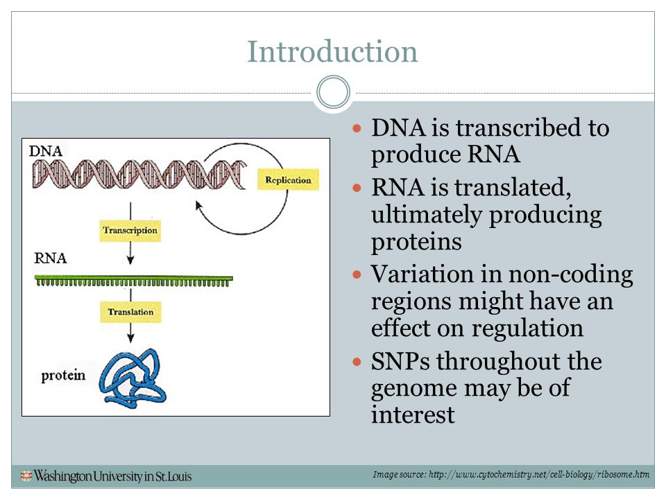 Introduction DNA is transcribed to produce RNA