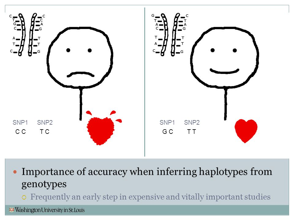 Importance of accuracy when inferring haplotypes from genotypes