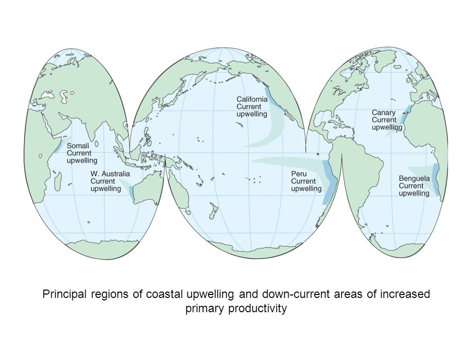 Principal regions of coastal upwelling and down-current areas of increased primary productivity