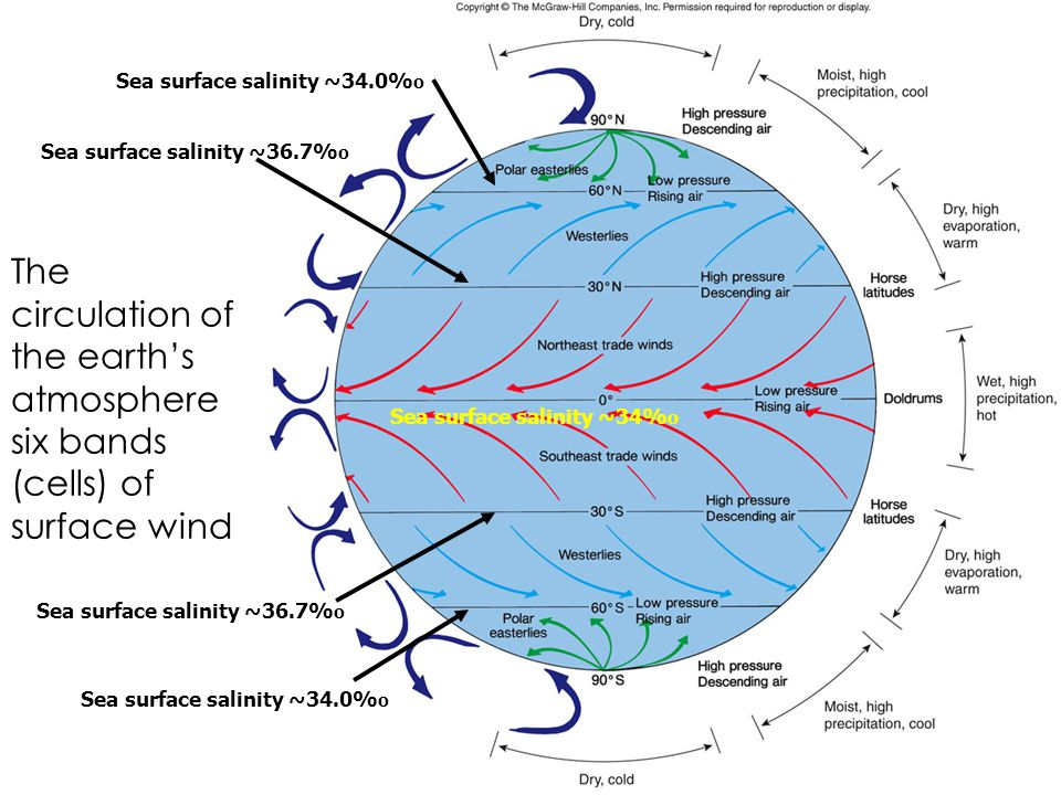 The circulation of the earth's atmosphere six bands (cells) of surface wind