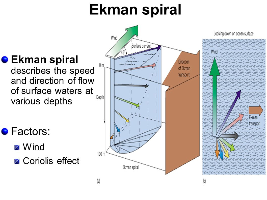 Ekman spiral Ekman spiral describes the speed and direction of flow of surface waters at various depths.