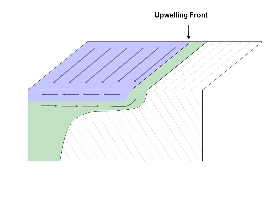 Upwelling Front
