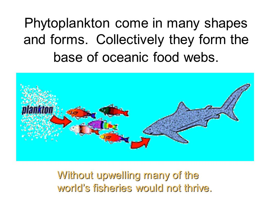 Phytoplankton come in many shapes and forms
