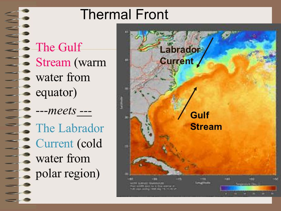 Thermal Front The Gulf Stream (warm water from equator) ---meets ---