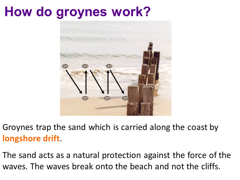 How do groynes work Groynes trap the sand which is carried along the coast by longshore drift.